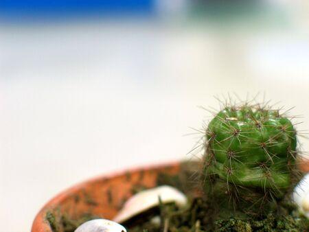 Un cactus sur une casserole avec un fond blanc