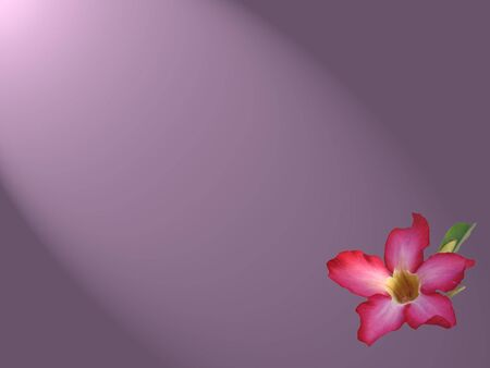 con�u une fleur de papier peint