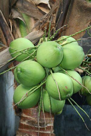 Close-up de noix de coco fruits