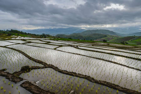Ban Pa Pong Piang rice terraces field in Mae Jam district of Chiangmai province of Thailand.
