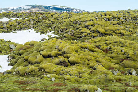 The wonderful of Eldhraun lava moss field in Iceland. This impressive lava field the biggest lava flow in the world.