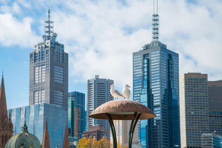 Seagull standing on the electric lamp with the cityscape of Melbourne in the background. Banque d'images