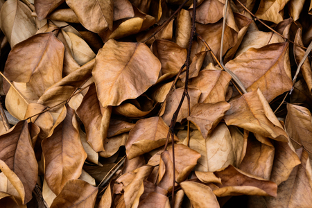 dead leaves: Dead leaves shot ideal for backgrounds and textures