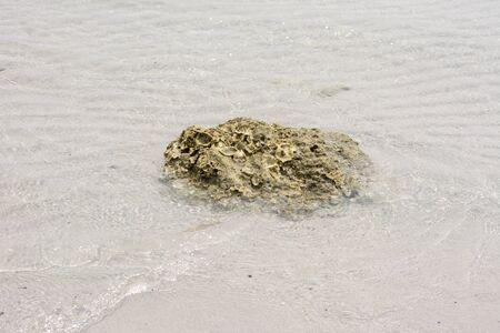 seawater: Shellfish clumping in seawater.
