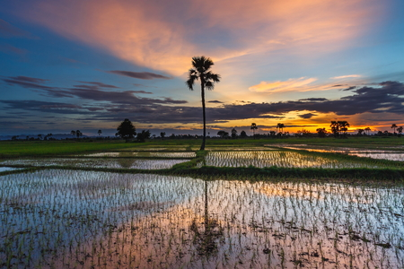 Paddy field Beautiful landscape thailand Rice Fields Sunrise Sunset Stok Fotoğraf