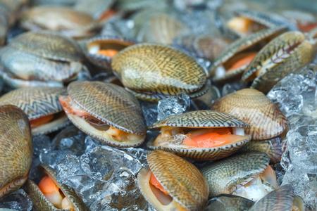 Surf clam, Short necked clam Thai Market blur.