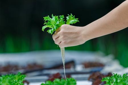 Hydroponics,Organic fresh harvested vegetables,Farmers hands holding fresh vegetables. Reklamní fotografie