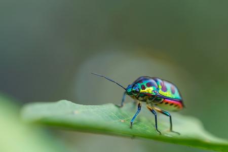 Beautiful bug on the leaf Background Bokeh blur.