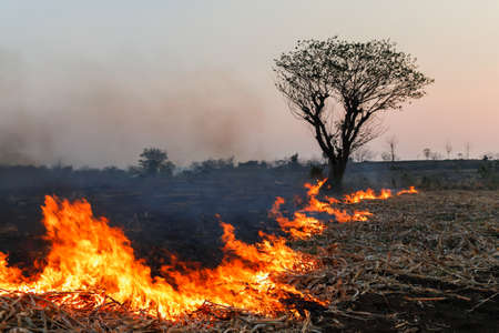 The impact of forest fires and farmers' gardens on fires causes toxic smog, drought, and wildlife death,blur,Soft focus,selected focus,shallow depth of field.