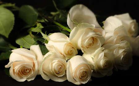 dozen: Dozen White Roses