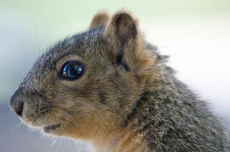 Squirrel Close Up Reklamní fotografie