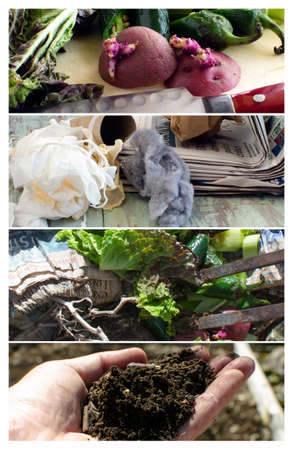 composting: The process of composting vegatable and household scraps