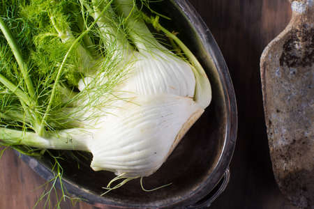 entrees: Fresh fennel root vegetable garden harvest healthy cooking