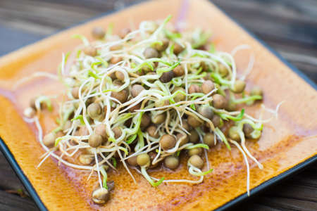 Fresh healthy organic pea sprouts homegrown