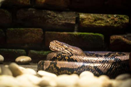 zvýšil: Retikulovaný Python  Python síťuje