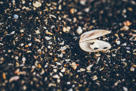 diversity of the region: Little sea shells and stones on sand. Stock Photo
