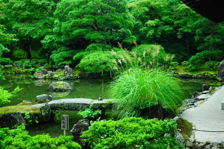 Beautiful garden landscape.