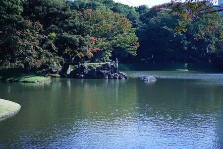 Pines of the koishikawa Korakuen garden 写真素材