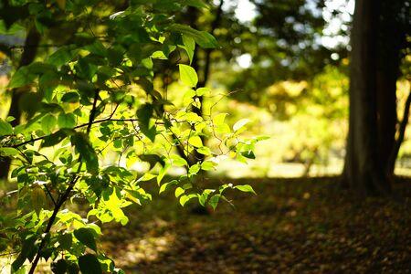 Autumn garden 写真素材
