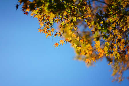 秋の紅葉と空