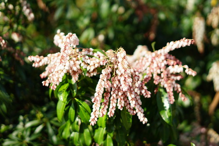 Small pink spring flowers