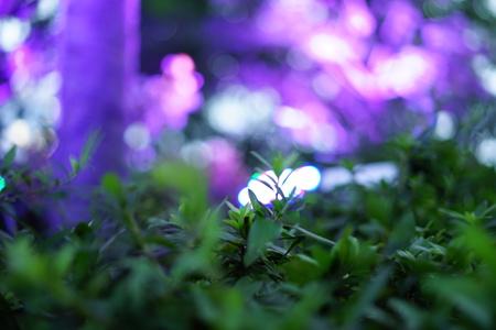 Purple light illuminated on the trees 写真素材