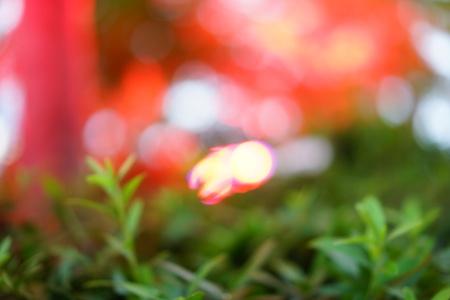 Red light illuminated on the trees 写真素材