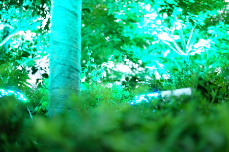 The sunlight illuminates at the trees in the green forest 写真素材