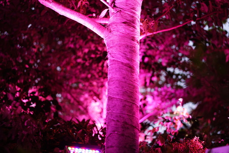 The purple light illuminates at the trees in the green forest