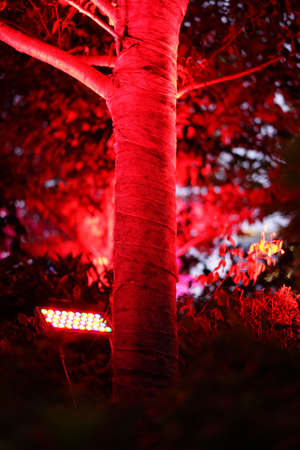 The red light illuminates at the trees in the green forest