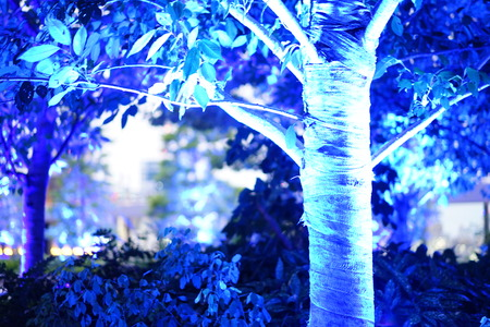 The blue light illuminates at the trees in the green forest