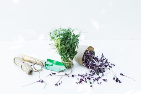 Frisches Mikrogrün auf weißem Hintergrund mit Gartengeräten