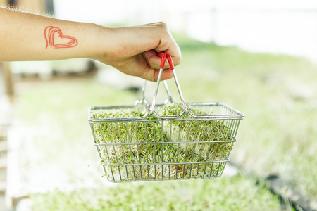 Fresh microgreen in the shopping cart on the dark background
