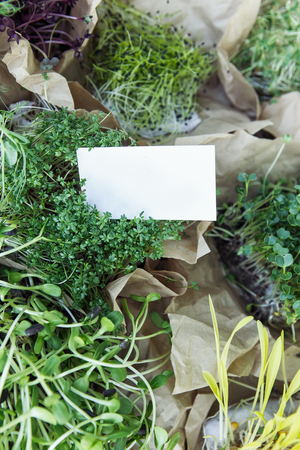 Different microgreen in craft paper on the natural background with business card 免版税图像