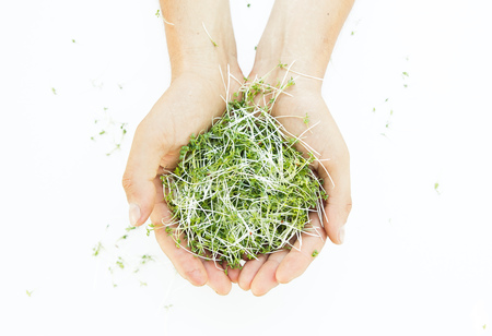 Fresh microgreen in man's hands on the white background
