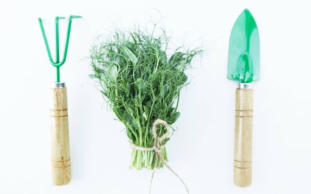 Fresh microgreen on the white background with garden tools