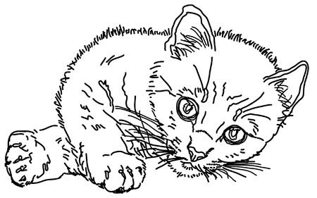 sketch of kitten Illustration