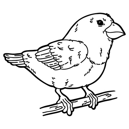 Cute bird. Vector illustration of cute outline bird which is sitting on a branch Illustration