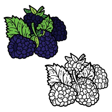 blackberries: cute blackberries. Vector cute hand drawn blackberries and leaf for coloring book Illustration