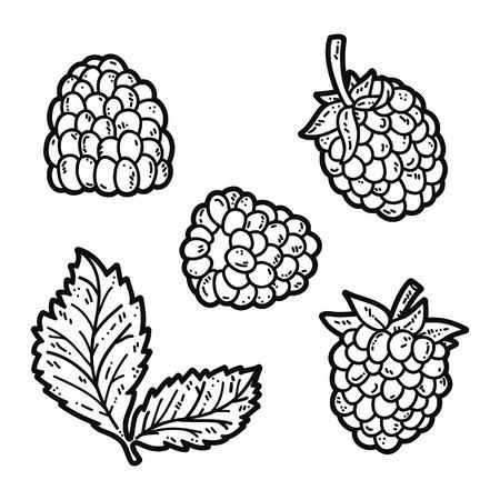 cute blackberries. Vector set of cute hand drawn outlines blackberry Ilustrace