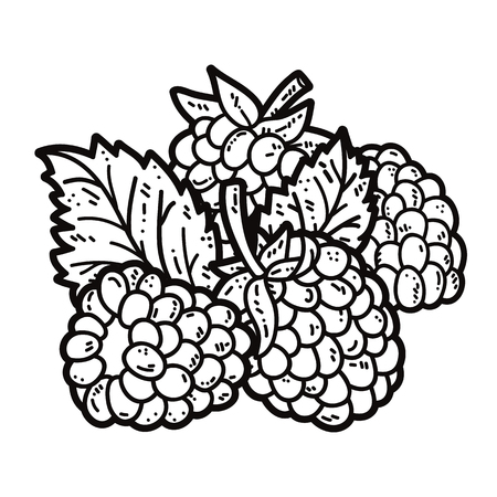 cute blackberries. Vector cute hand drawn blackberries and leaf outlines Illustration