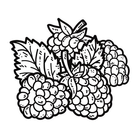 blackberries: cute blackberries. Vector cute hand drawn blackberries and leaf outlines Illustration