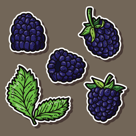 cute blackberries. Vector stickers set of cute hand drawn blackberry Vector
