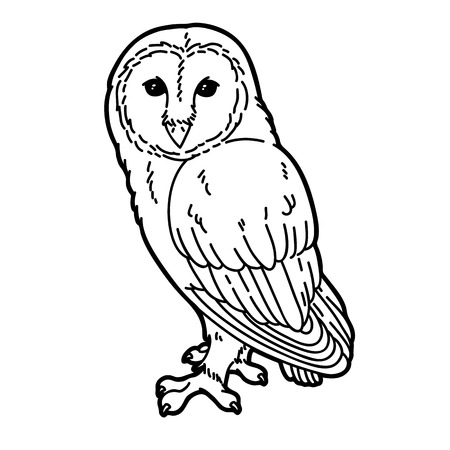Cute owl.  Vector