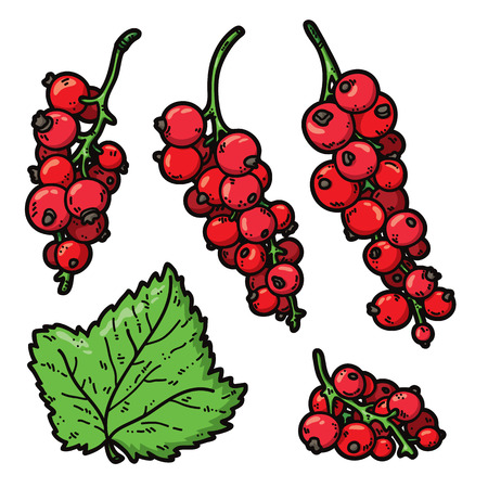red currant: cute currant. Vector set of cute hand drawn colorful red currant Illustration