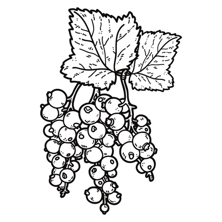 cute currant. Vector cute hand drawn currant and leaf outlines Иллюстрация