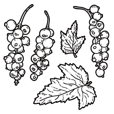 currant: cute currant. Vector set of cute hand drawn outlines currant