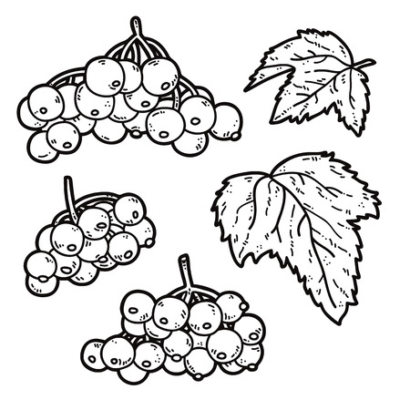 viburnum: cute viburnum. Vector set of cute hand drawn outlines viburnum