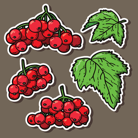 viburnum: cute viburnum. Vector stickers set of cute hand drawn colorful viburnum