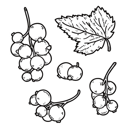 cute black currant. Vector set of cute hand drawn outlines black currant Illustration